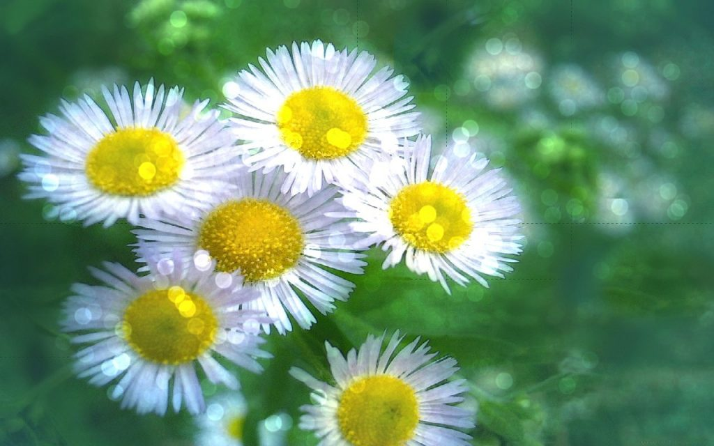 flower-daisies-sunlight-flowers-field-white-daisy-nature-sparkling-wallpaper-nice-PIC-MCH064228-1024x640 Sparkling Wallpapers Free 25+