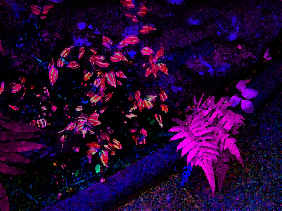 flowers-flower-plant-night-neon-fern-colorful-screen-wallpapers-PIC-MCH064346 Neon Wallpapers For Mobile 32+