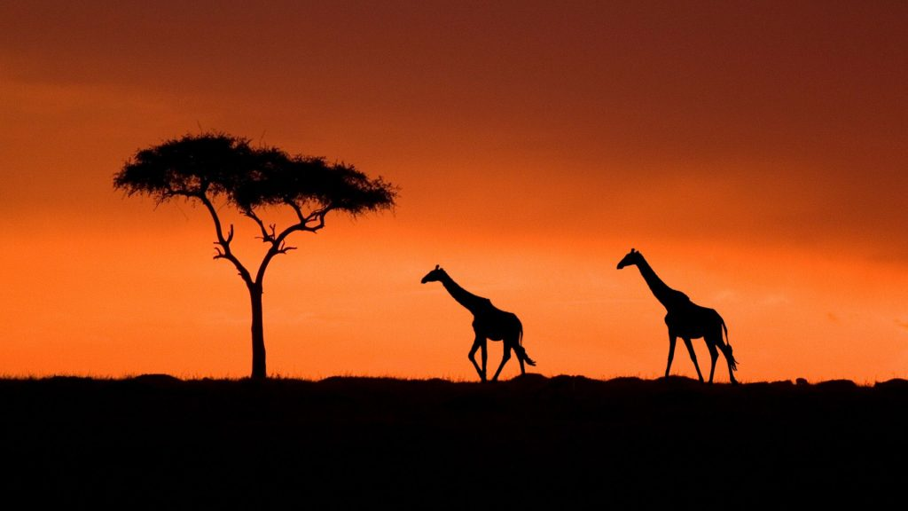 giraffe-wallpaper-PIC-MCH017192-1024x576 Giraffe Hd Wallpapers For Pc 47+