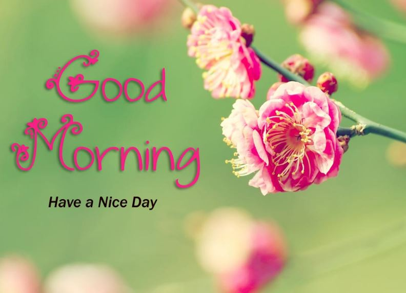 good-morning-images-nature-hd-PIC-MCH069015 Good Morning Beautiful Wallpapers Hd 27+