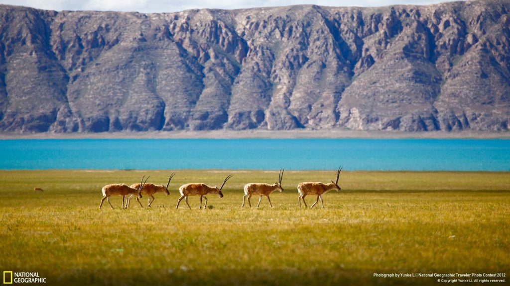 national-geographic-wallpaper-free-Download-PIC-MCH088880-1024x576 Nat Geo Wallpaper Mac 33+