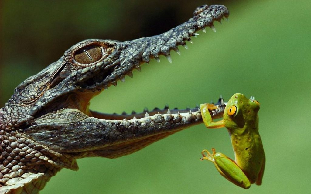 national-geographic-wallpaper-hd-x-for-windows-PIC-MCH024682-1024x640 Nat Geo Wallpapers Animals 53+