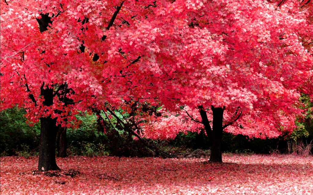 new-beautiful-nature-wallpaper-x-for-iphone-s-PIC-MCH06460-1024x640 Hd Photo Wallpaper Free 29+