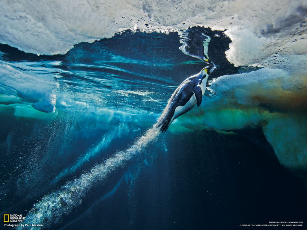 penguins-launches-to-ice-PIC-MCH0211-1024x768 Nat Geo Wallpaper Ipad 38+
