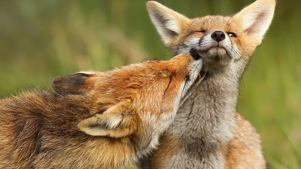 red-fox-national-geographic-wallpapers-widescreen-On-Wallpaper-p-HD-PIC-MCH098288-1024x576 Nat Geo Wallpaper Ipad 38+