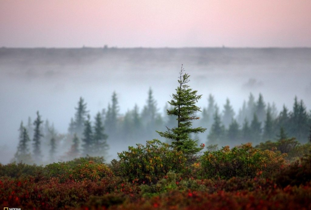 trees-national-geographic-beautiful-nature-background-images-x-PIC-MCH0108129-1024x691 Nat Geo Wallpaper Ipad 38+