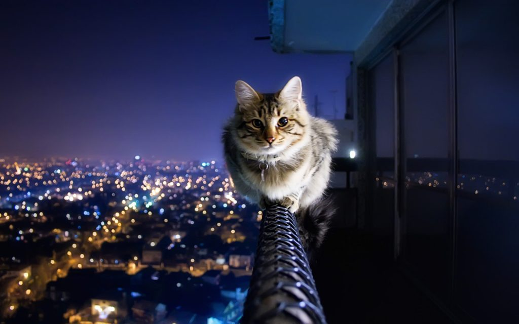 Cats-Wallpaper-x-Background-PIC-MCH051634-1024x640 Hd Cat Wallpapers For Pc 41+