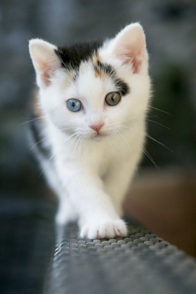 Cute-Cat-PIC-MCH055407 Hd Cat Wallpapers For Mobile 25+