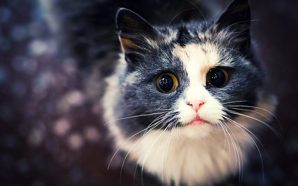 Download-hd-cat-wallpapers-tumblr-PIC-MCH060120-1024x640 Hd Cat Wallpapers Free 49+
