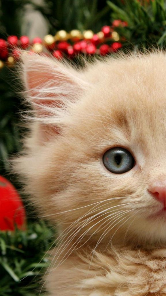 Funny-Christmas-Cat-HD-Wallpaper-iPhone-PIC-MCH066786-576x1024 Hd Cat Wallpapers Iphone 41+