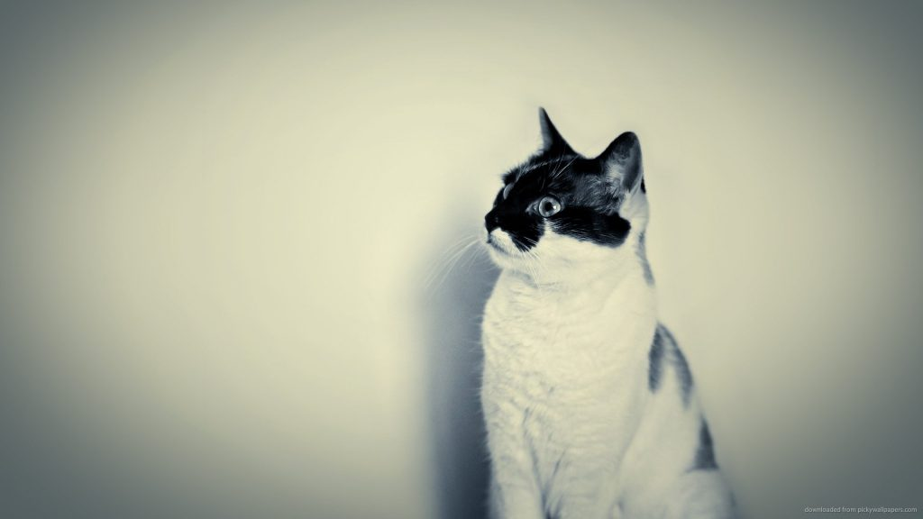 Hipster-Cat-Wallpaper-On-Wallpaper-Hd-PIC-MCH073202-1024x576 Hipster Cat Wallpaper Hd 36+