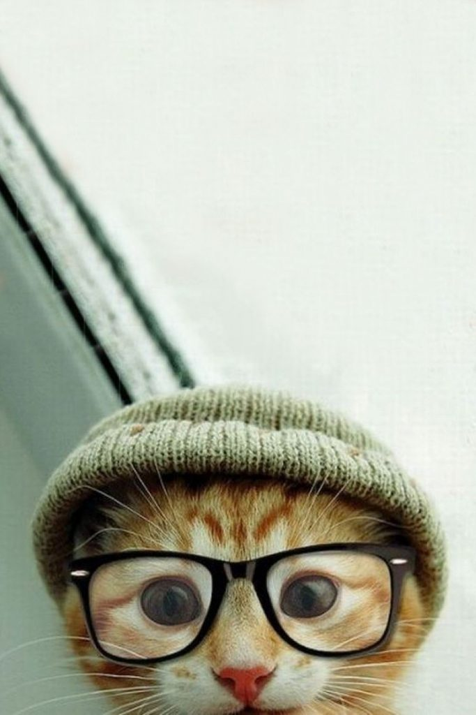 Hipster-Cat-Wallpaper-On-Wallpaper-Hd-PIC-MCH073225-683x1024 Hd Cat Wallpapers For Android 29+