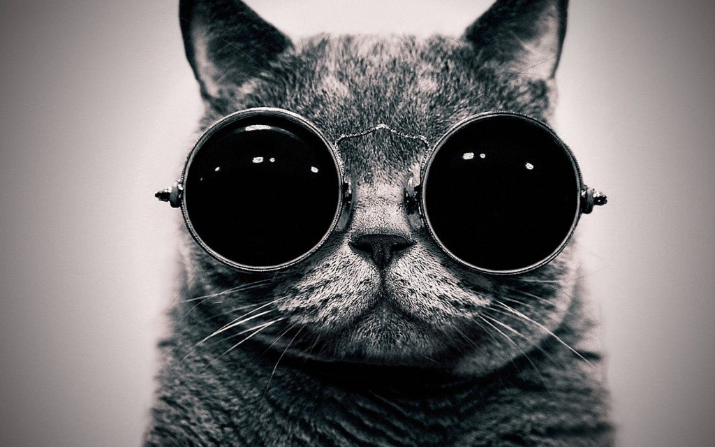 Hipster-Cat-Wallpaper-On-Wallpaper-Hd-PIC-MCH073228-1024x640 Hipster Cat Wallpaper Tumblr 23+