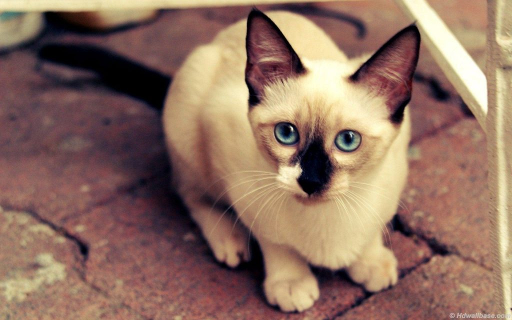 JTZE-PIC-MCH024047-1024x640 Hd Cat Wallpapers For Pc 41+