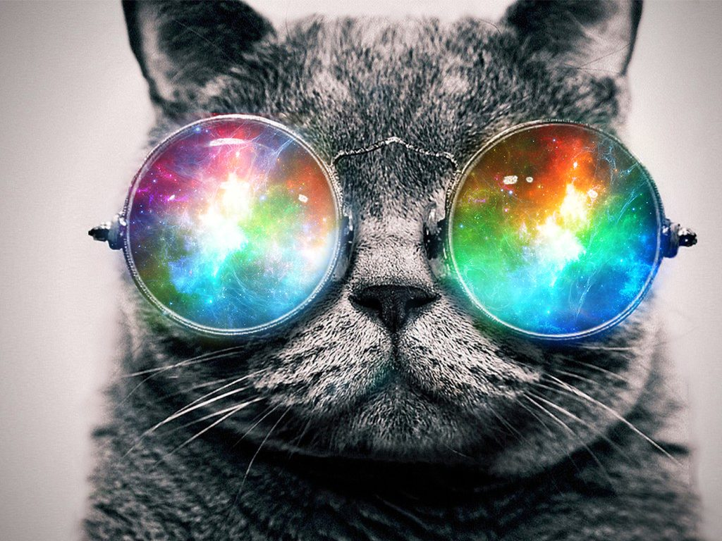 LmCIS-PIC-MCH082701-1024x768 Hipster Cat Wallpaper Hd 36+
