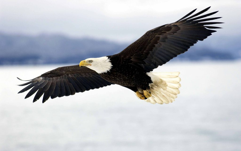 MwWajqg-PIC-MCH088201-1024x640 Eagles Wallpapers Free 53+