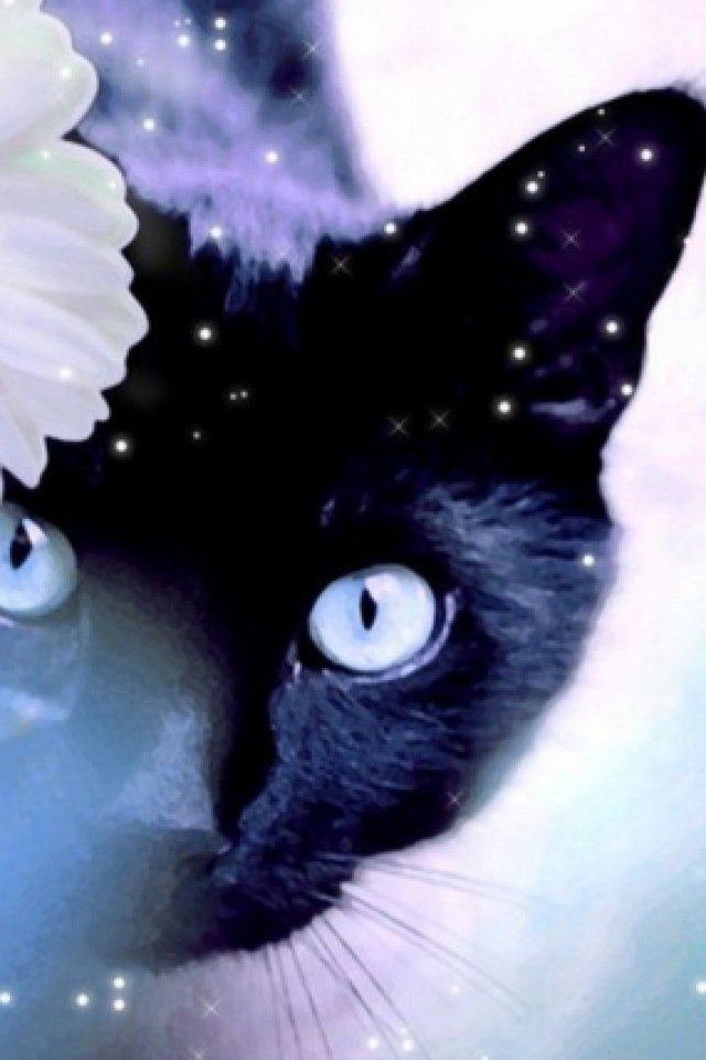 OumiS-PIC-MCH092723 Hipster Cat Iphone Wallpaper 14+