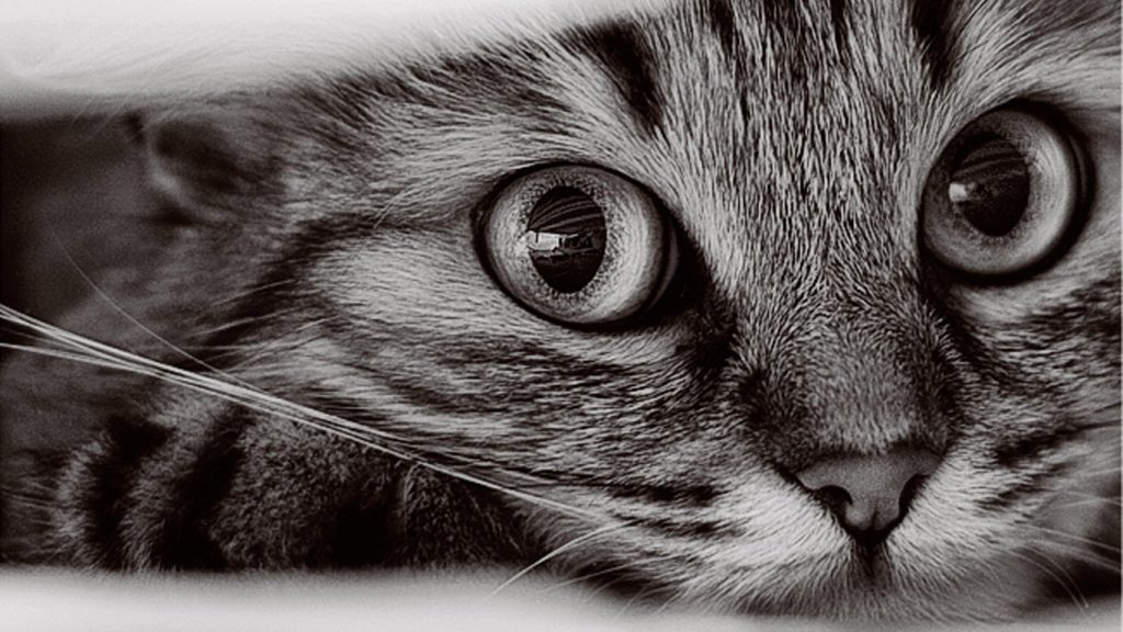PIC-MCH010841-1024x576 Hd Cat Wallpapers Free 49+