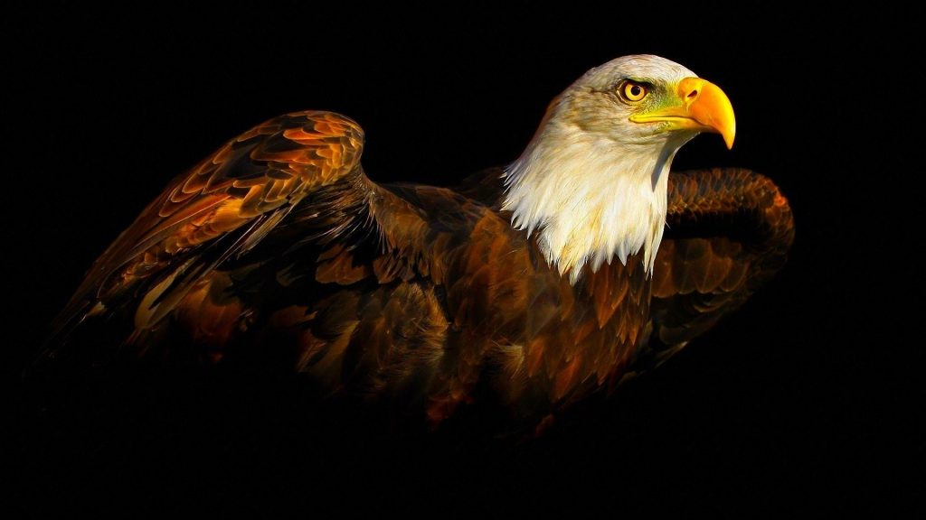 PIC-MCH012234-1024x576 Beautiful Eagles Wallpapers 39+