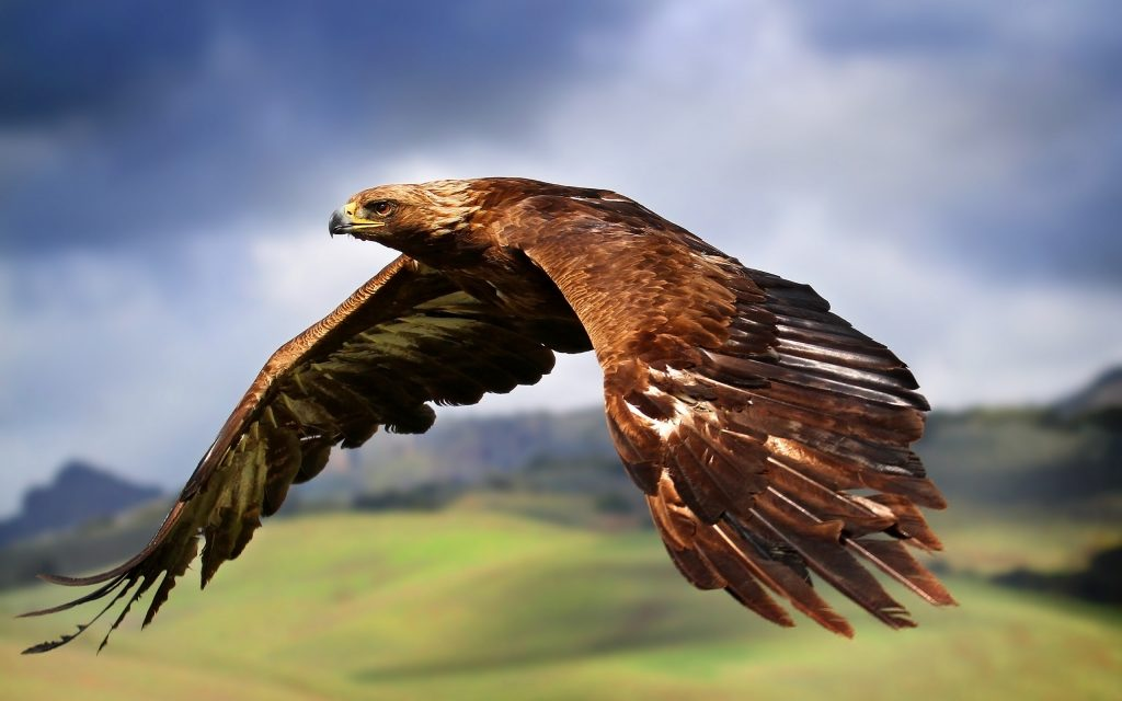 PIC-MCH012330-1024x640 Eagles Wallpapers Free 53+