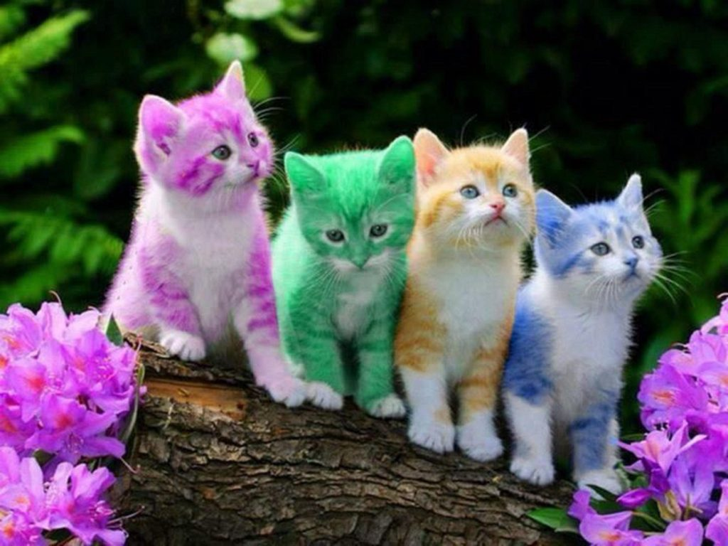 PIC-MCH021056-1024x768 Hd Cat Wallpapers Free 49+