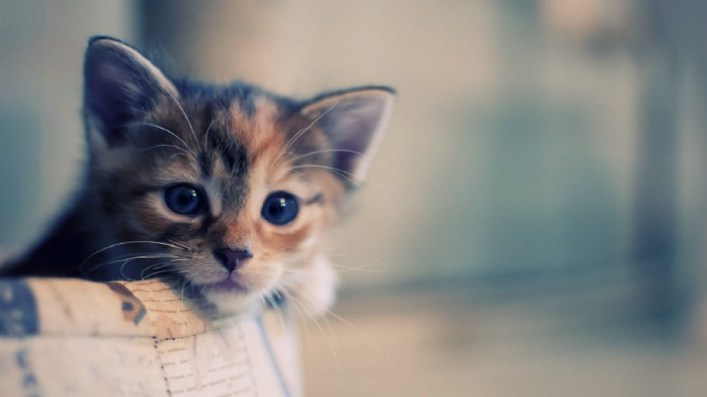 PIC-MCH030376-1024x576 Hd Cat Wallpapers For Android 29+