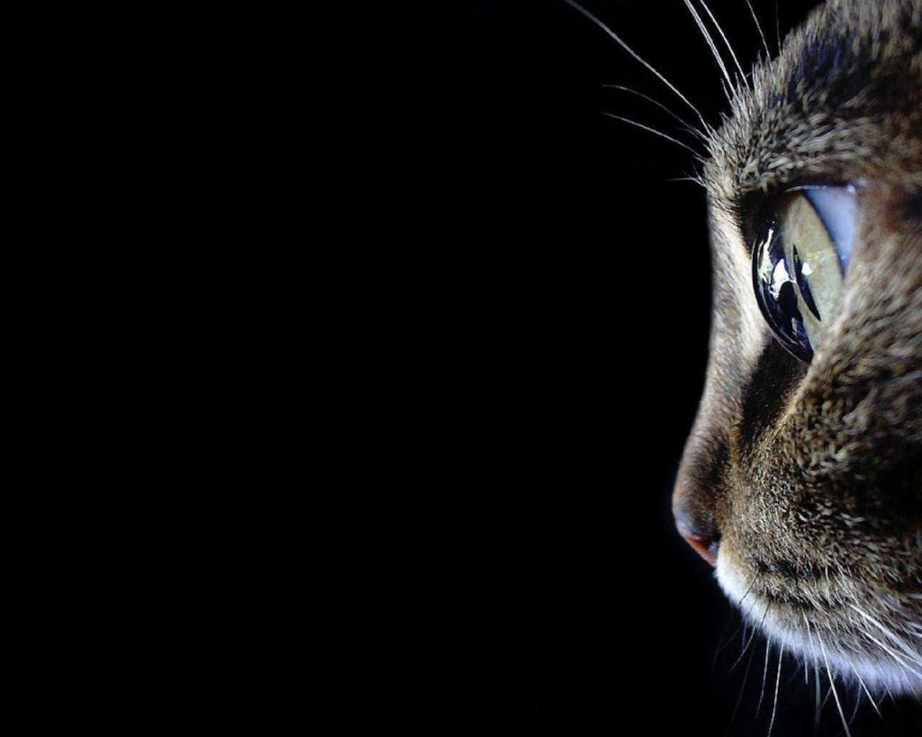 PIC-MCH032561-1024x819 Hipster Cat Wallpaper Hd 36+