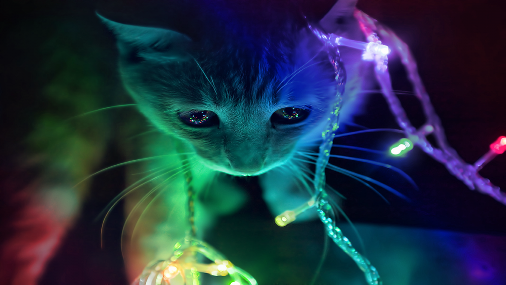 QKsa-PIC-MCH096830-1024x576 Hd Cat Wallpapers For Pc 41+