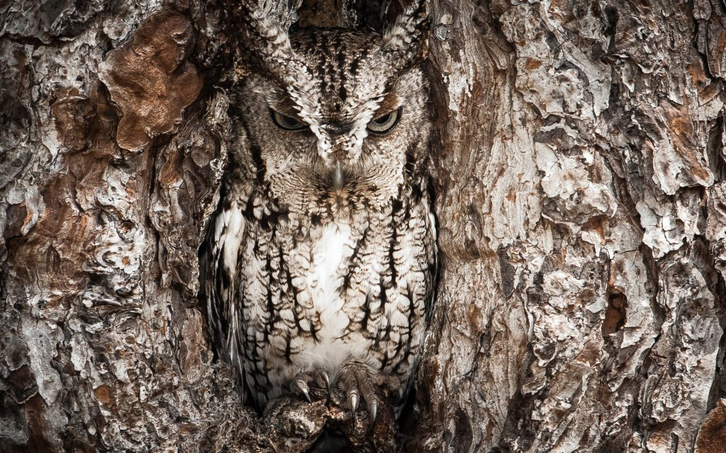 Realtree-Camouflage-Owl-Animal-HD-Wallpapers-PIC-MCH098085-1024x640 Realtree Wallpaper Android 24+