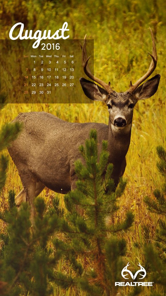 august-x-PIC-MCH042207-576x1024 Realtree Wallpaper Android 24+