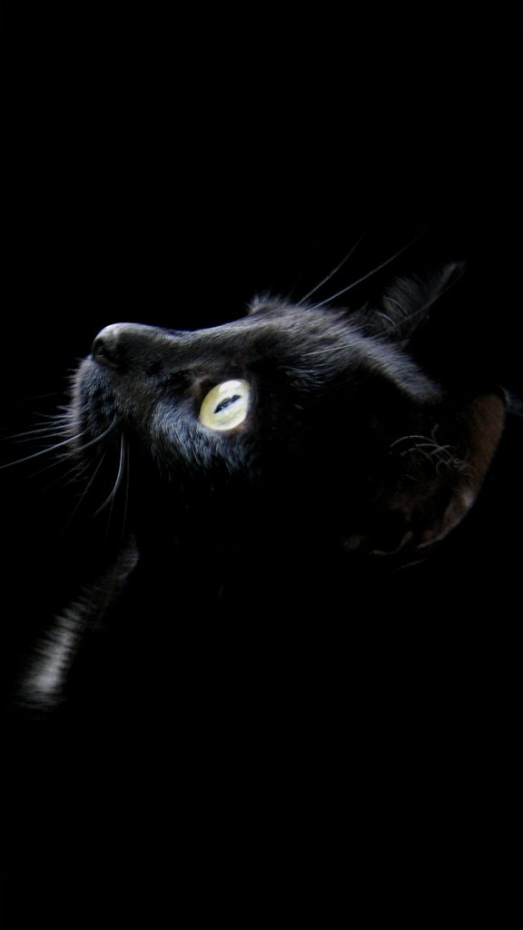 black-cat-PIC-MCH047264-576x1024 Hd Cat Wallpapers For Mobile 25+