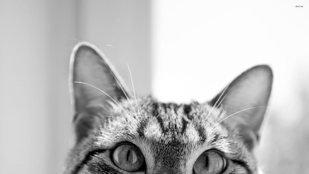 browse-a-large-selection-of-wallpapers-hipster-cat-wallpaper-tumblr-PIC-MCH049755-1024x576 Hipster Cat Wallpaper Tumblr 23+