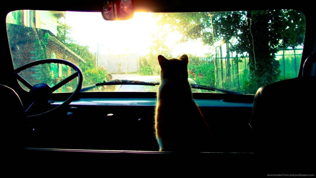 cat-in-the-old-truck-PIC-MCH051536-1024x576 Truck Wallpapers 1366x768 26+