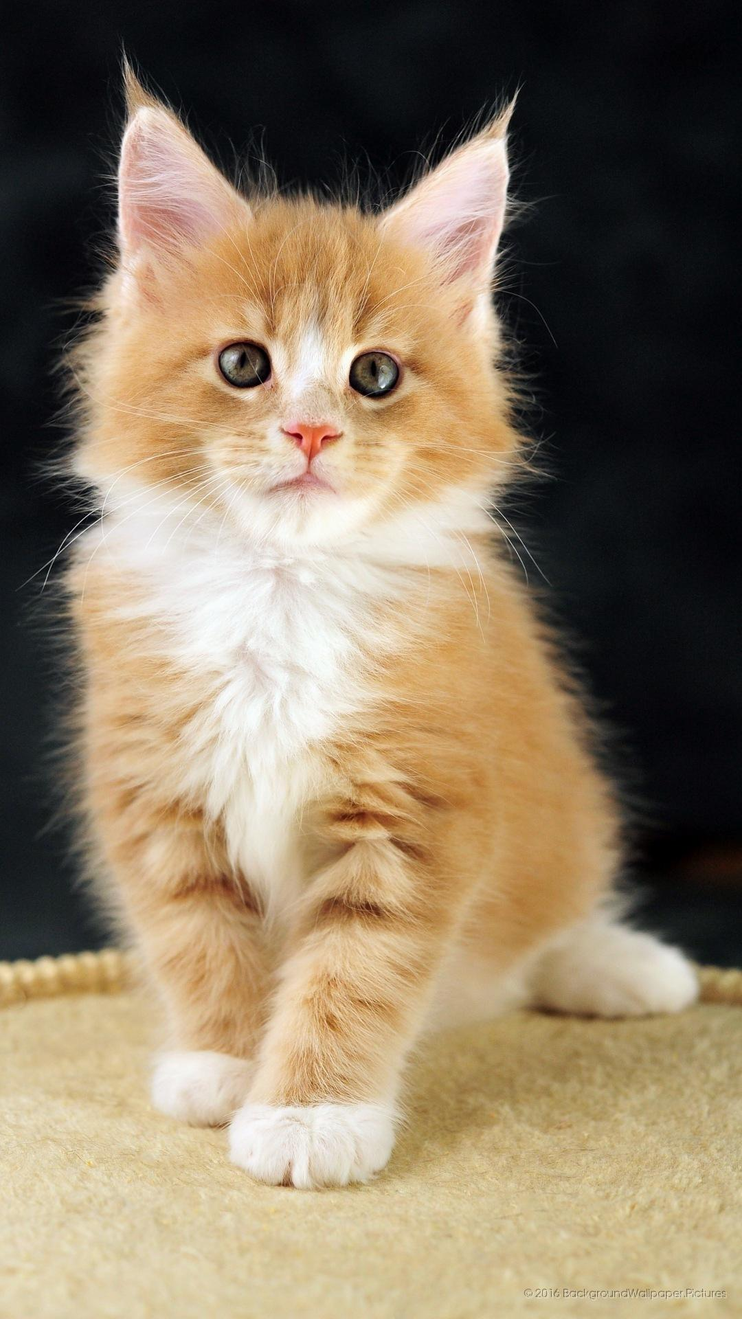 Hd Cat Wallpapers For Mobile 25