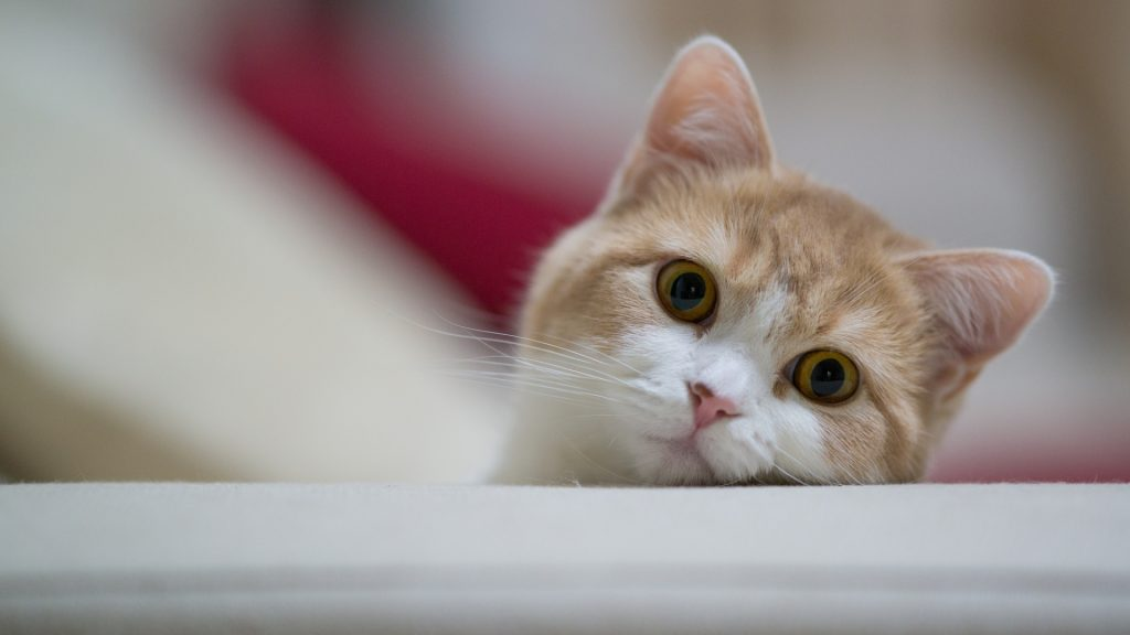 cat-wallpapers-phone-For-Desktop-Wallpaper-PIC-MCH051598-1024x576 Hd Cat Wallpapers For Pc 41+