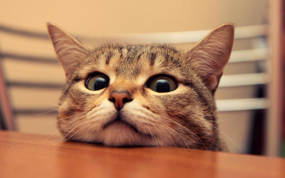 cute-cat-wallpaper-K-middle-size-PIC-MCH055400 Hd Cat Wallpapers For Pc 41+