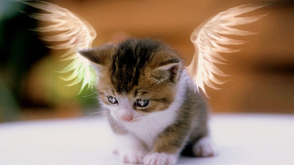 dURJxI-PIC-MCH061276-1024x576 Hd Cat Wallpapers Free 49+