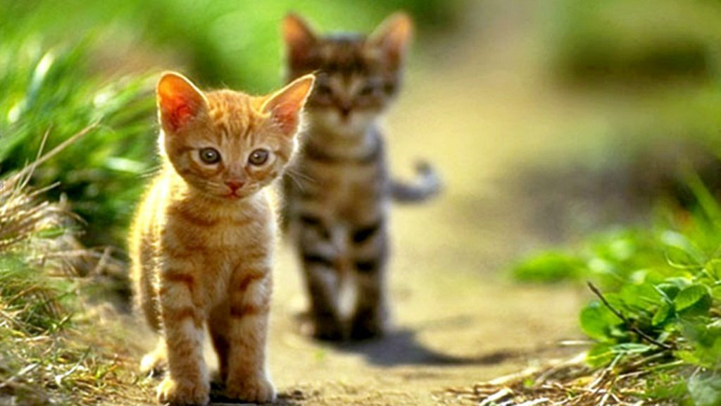 desktop-hd-lots-of-cats-wallpaper-PIC-MCH058160-1024x576 Hd Cat Wallpapers For Pc 41+