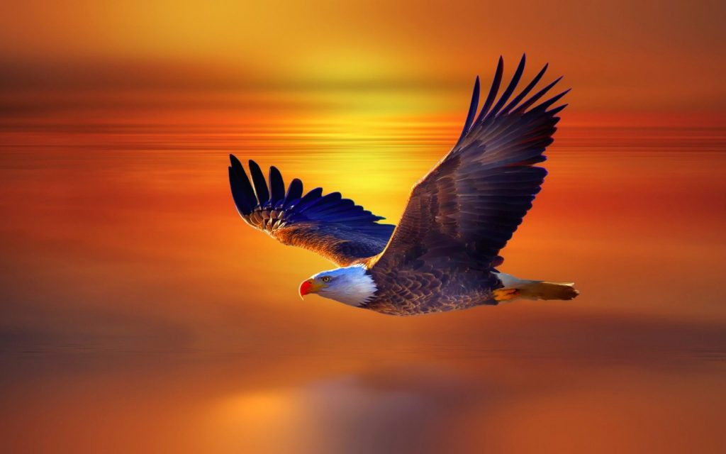 eagle-flying-hd-wallpaper-PIC-MCH061543-1024x640 Beautiful Eagles Wallpapers 39+