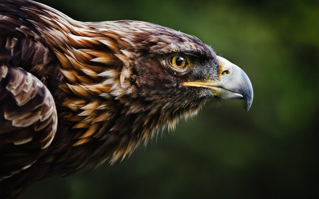 eagle-free-wallpapers-PIC-MCH061544-1024x640 Eagles Wallpapers Free 53+