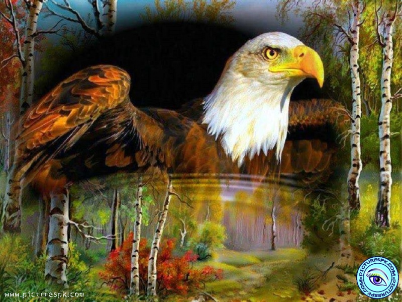 fantastic-eagle-wallpaper-PIC-MCH063193 Beautiful Eagles Wallpapers 39+