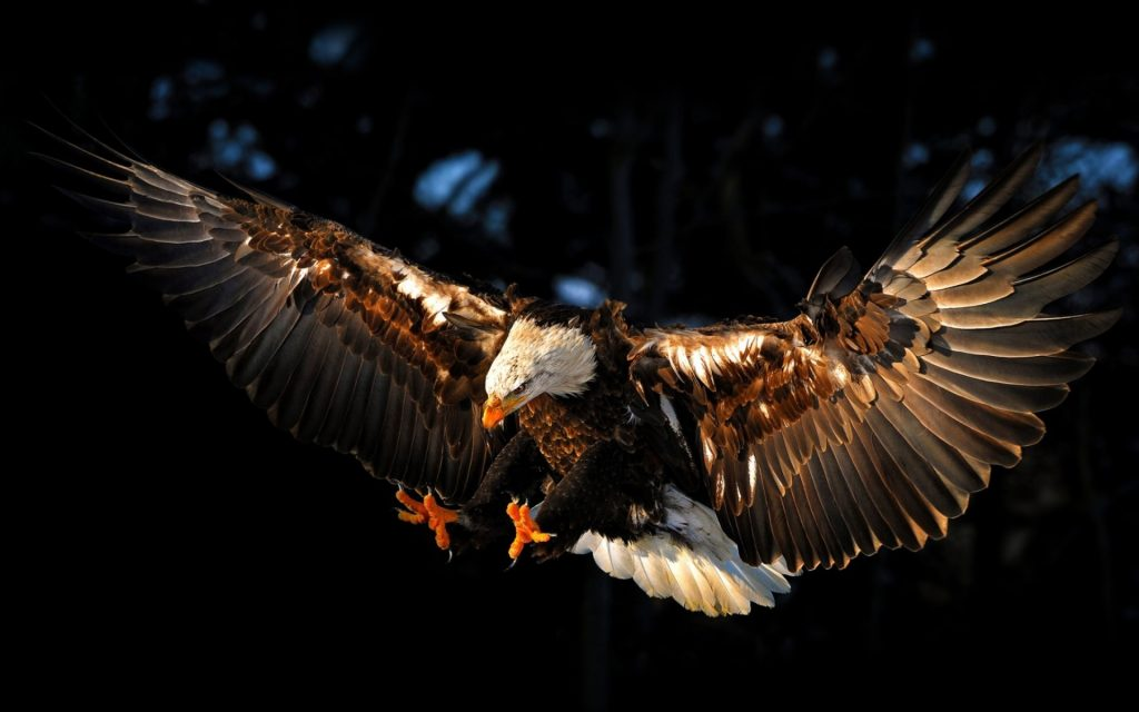 flying-eagle-widescreen-full-hd-wallpaper-free-background-photos-download-amazing-free-abstract-PIC-MCH064449-1024x640 Eagles Wallpapers Free 53+