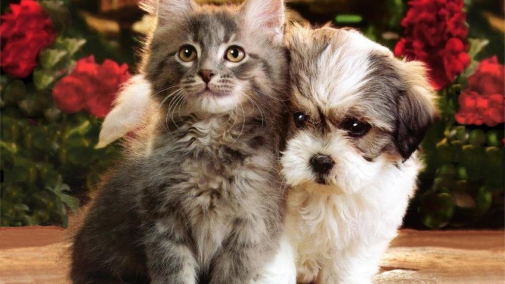 free-cats-and-dogs-hd-cats-wallpapers-free-download-wallpapers-of-dogs-and-cats-wallpaper-PIC-MCH065022-1024x576 Hd Cat Wallpapers Free 49+