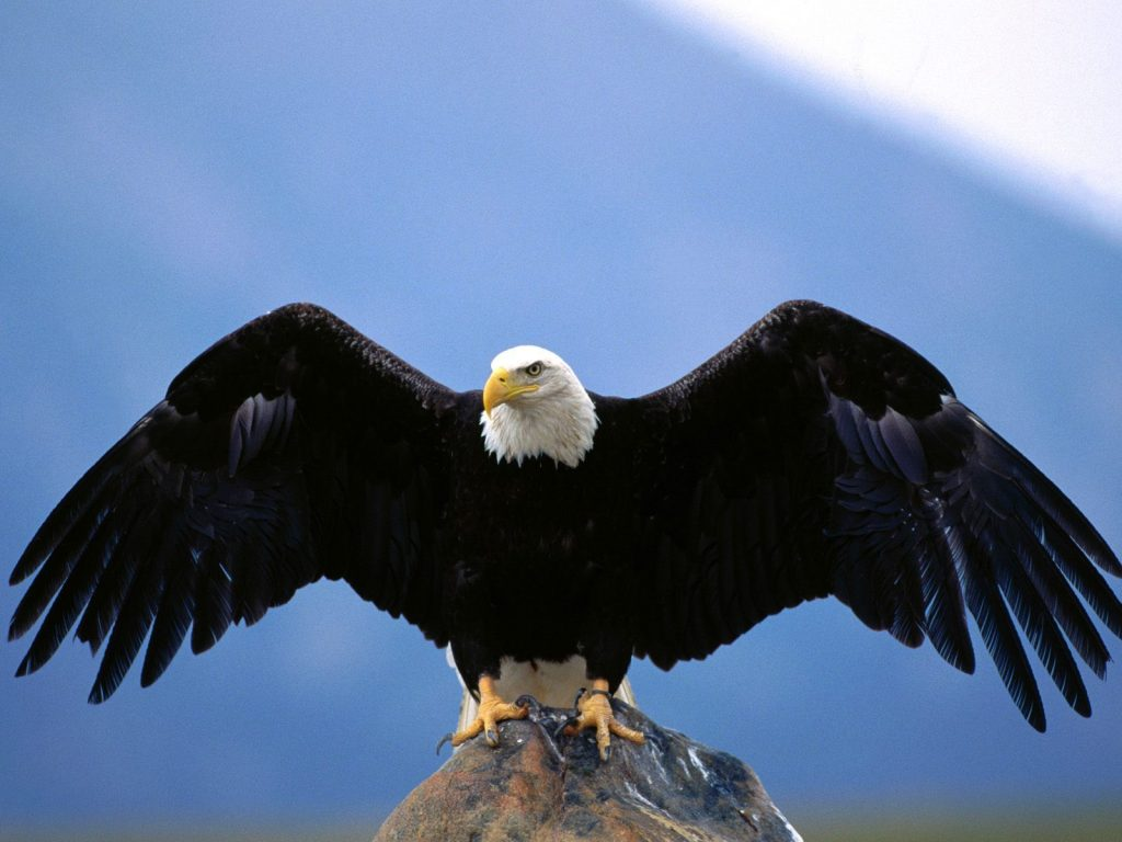 hd-eagles-wallpaper-free-PIC-MCH071779-1024x768 Eagles Wallpapers Free 53+