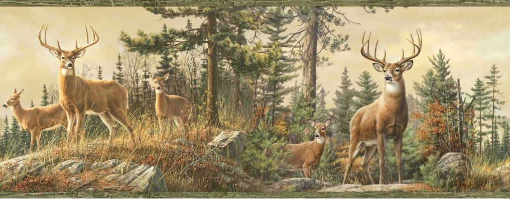 iwp-deer-wallpapers-PIC-MCH077981-1024x400 Realtree Wallpaper Border 20+