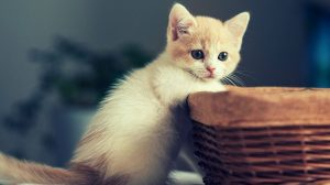 Hd Cat Wallpapers For Android 29+