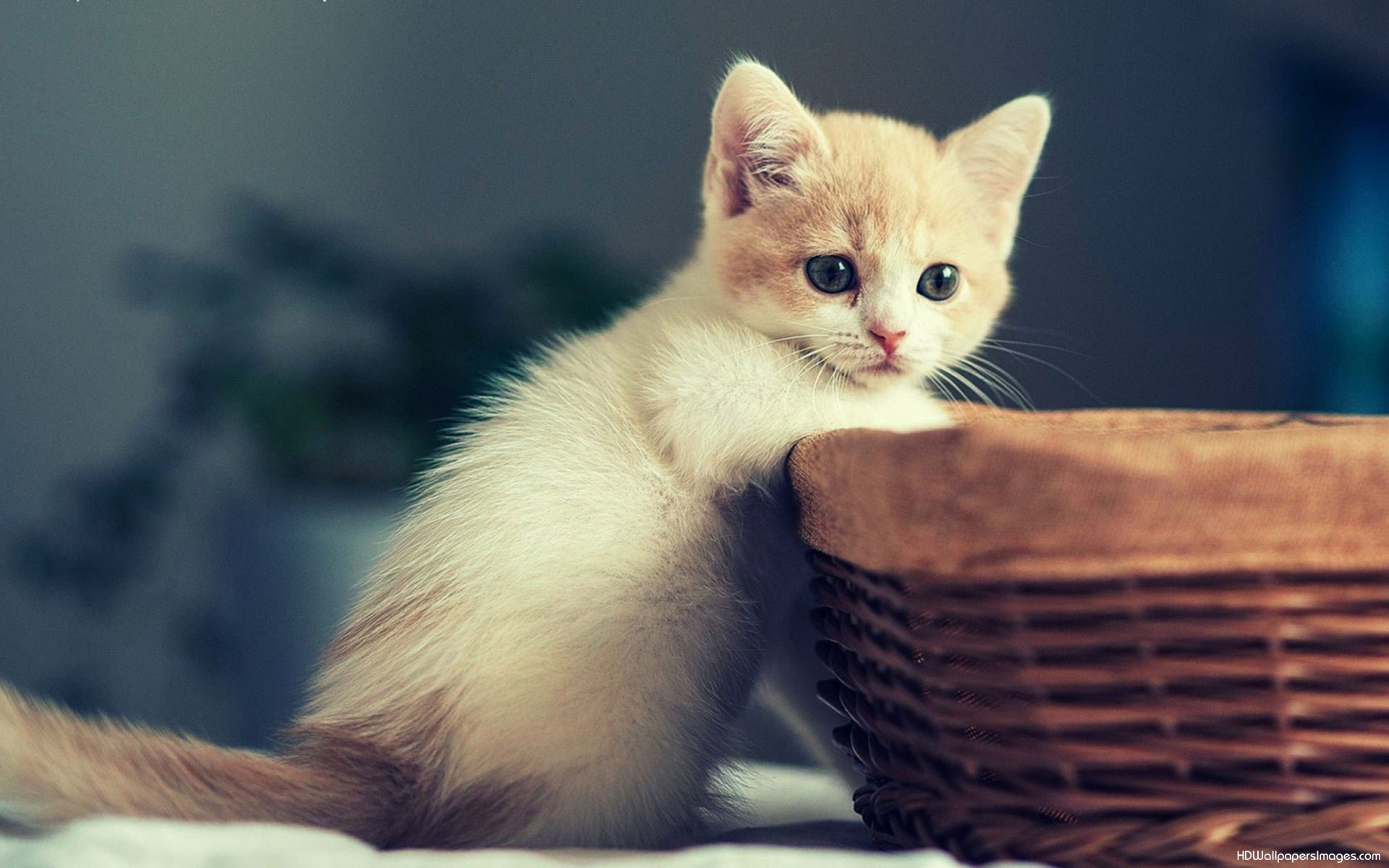 Hd Cat Wallpapers For Android 29 Dzbc Org