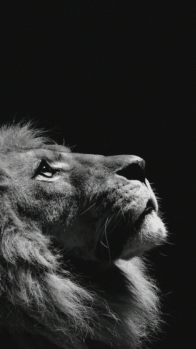 Lion Looking Sky Animal Nature Dark Photo Iphone Wallpaper