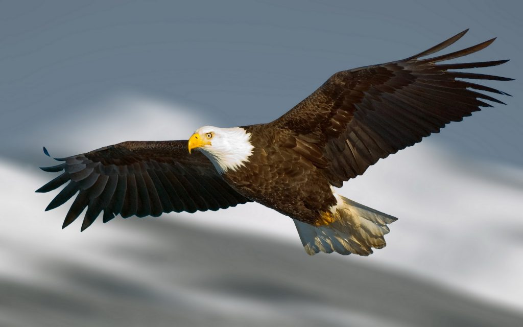 most-popular-flying-eagle-wallpaper-x-for-android-tablet-PIC-MCH024857-1024x640 Beautiful Eagles Wallpapers 39+