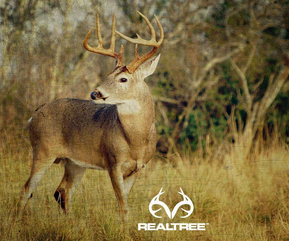 tbAvdms-PIC-MCH0105967 Realtree Wallpaper Android 24+